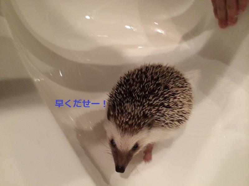 f:id:chikojirou:20150718222311j:plain