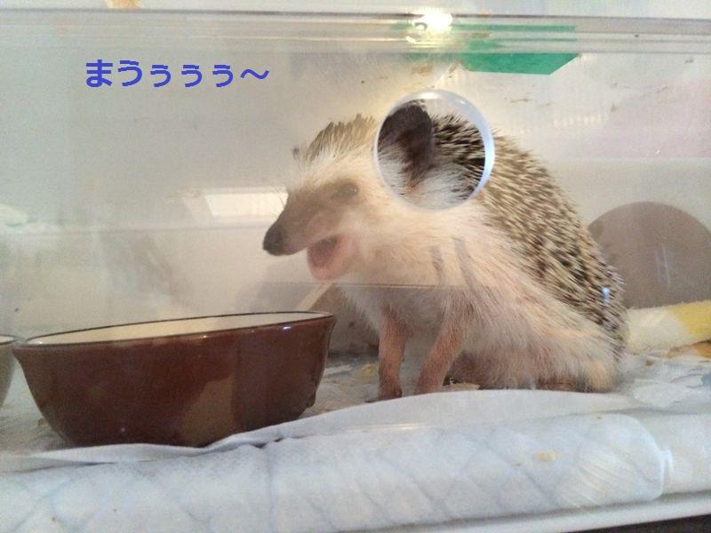 f:id:chikojirou:20150720192945j:plain