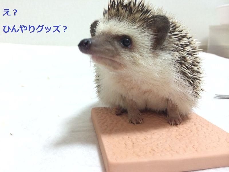 f:id:chikojirou:20150720193752j:plain