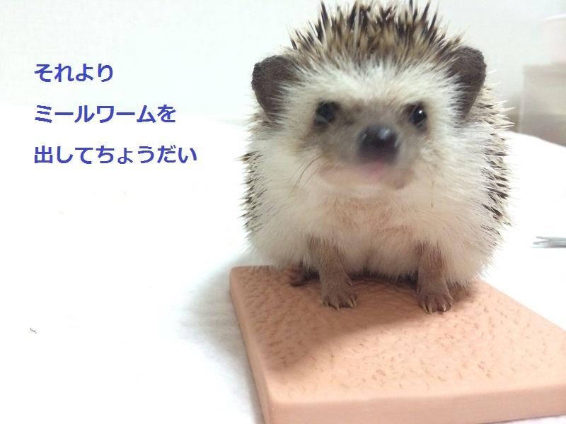 f:id:chikojirou:20150720194051j:plain