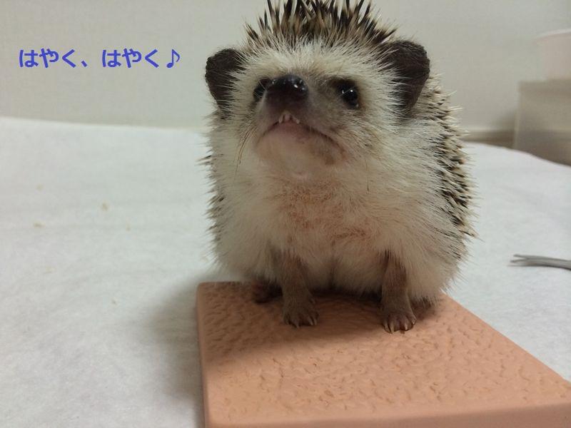 f:id:chikojirou:20150720194211j:plain