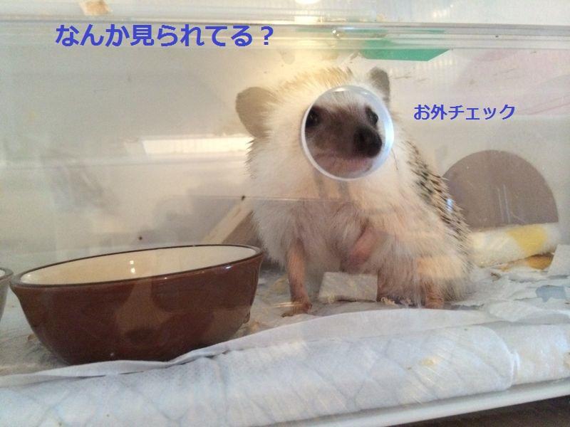 f:id:chikojirou:20150720194746j:plain
