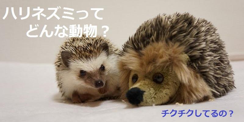f:id:chikojirou:20150823160401j:plain