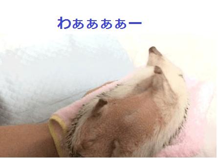 f:id:chikojirou:20151231123837p:plain