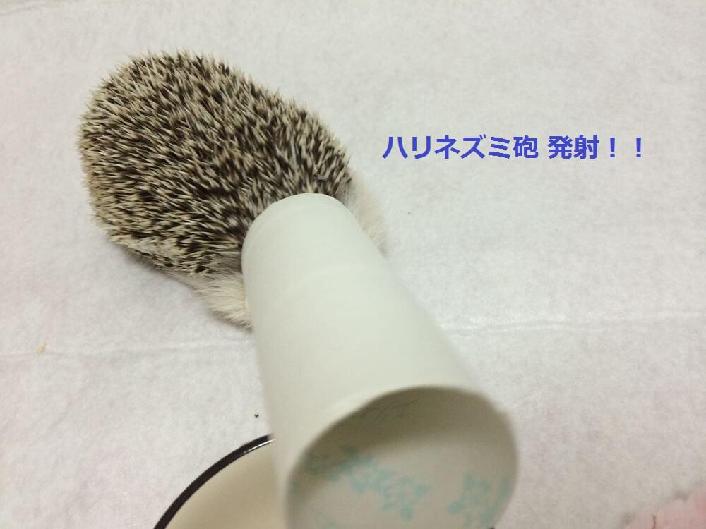 f:id:chikojirou:20151231123901j:plain