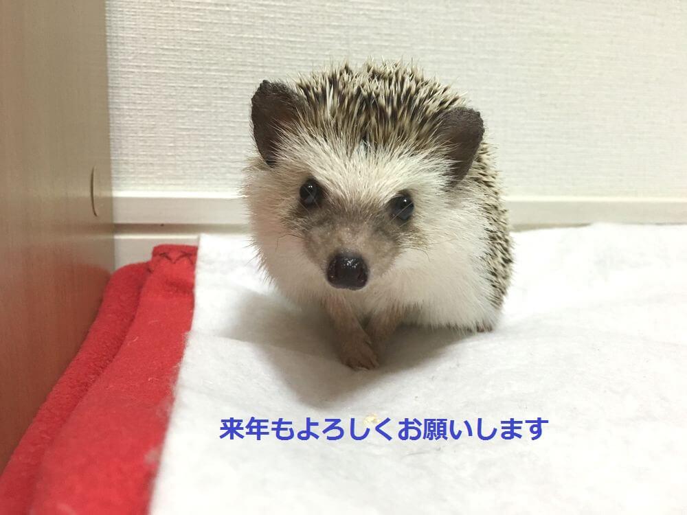 f:id:chikojirou:20151231124145j:plain