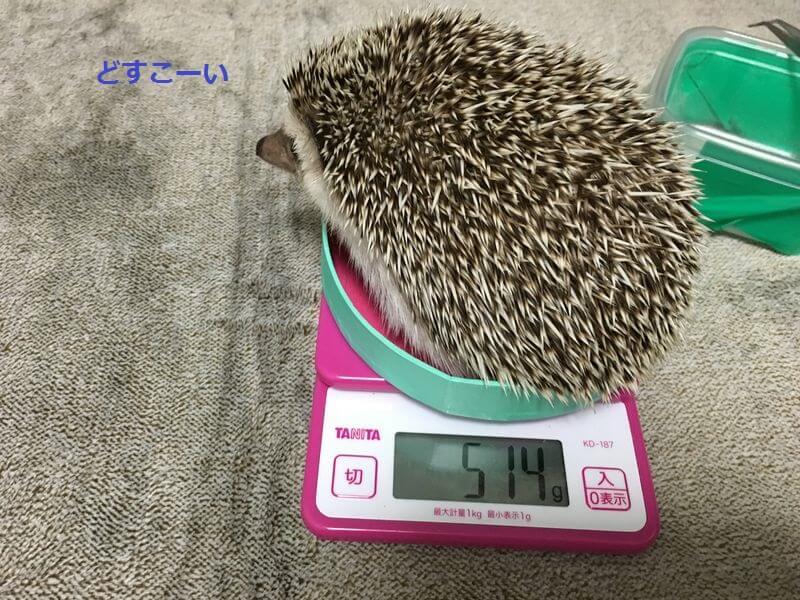 f:id:chikojirou:20160223213013j:plain