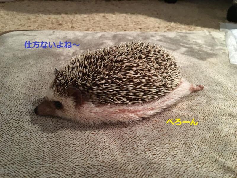 f:id:chikojirou:20160223213023j:plain