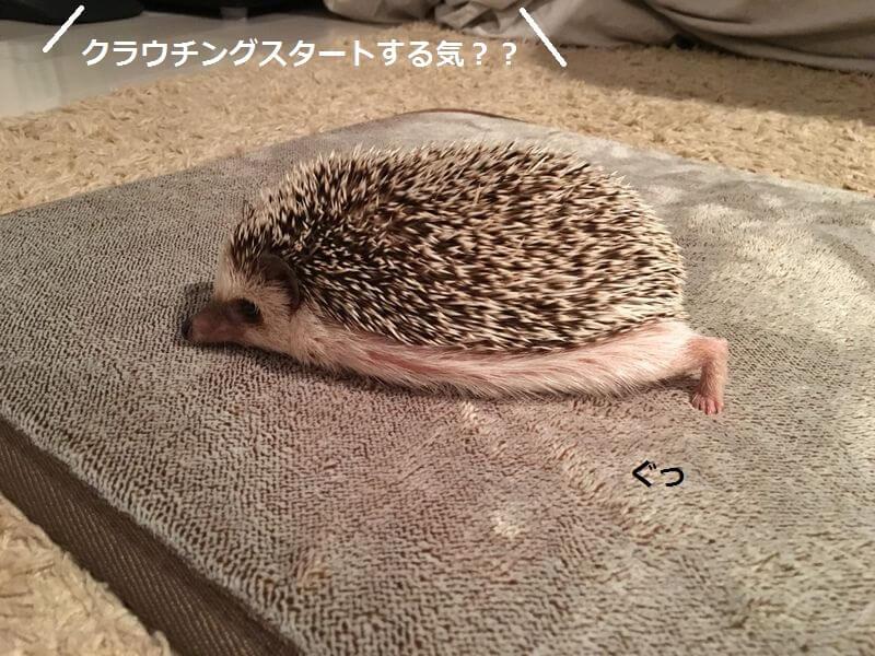 f:id:chikojirou:20160223213141j:plain