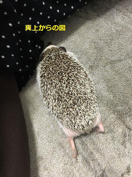 f:id:chikojirou:20160302213526j:plain