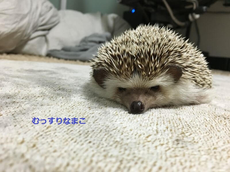 f:id:chikojirou:20160330212115j:plain
