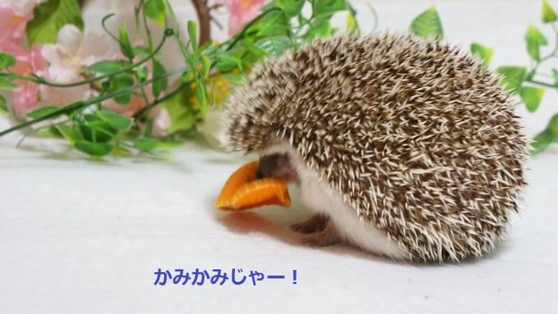 f:id:chikojirou:20160421215447j:plain