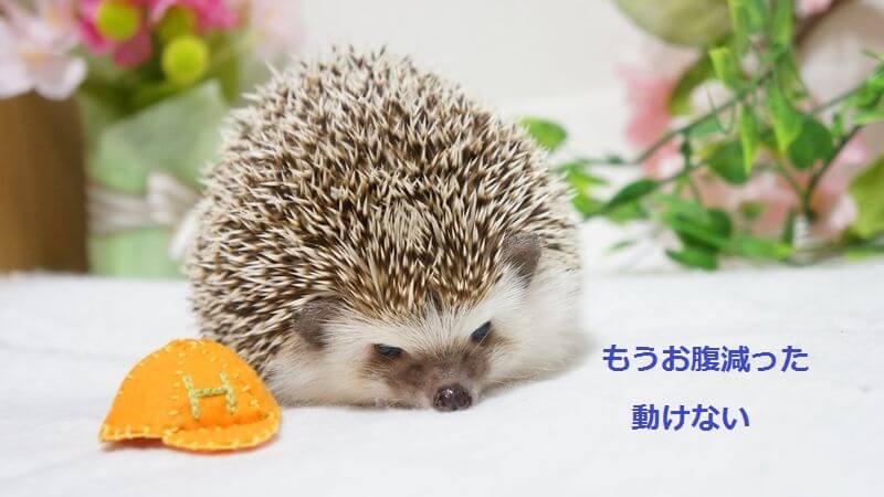 f:id:chikojirou:20160421215519j:plain