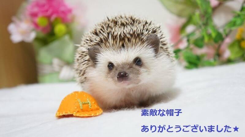 f:id:chikojirou:20160421215534j:plain