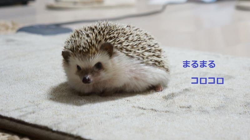 f:id:chikojirou:20160527195118j:plain