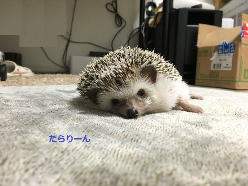 f:id:chikojirou:20160613212053j:plain