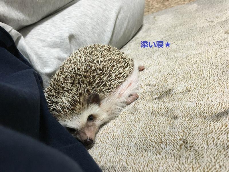 f:id:chikojirou:20160613212111j:plain