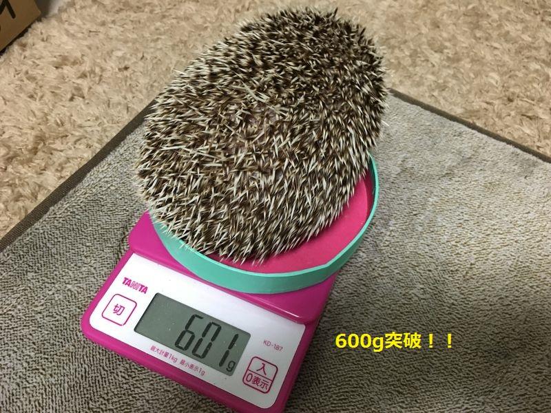 f:id:chikojirou:20160613212208j:plain