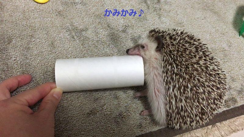 f:id:chikojirou:20160614213759j:plain