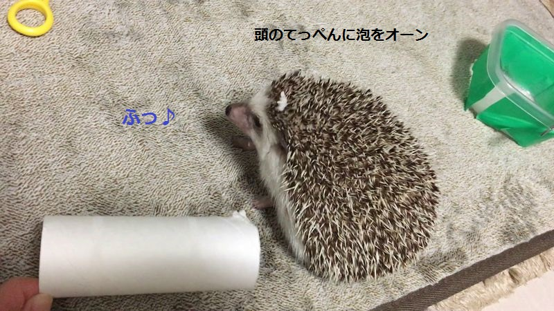 f:id:chikojirou:20160614213810j:plain
