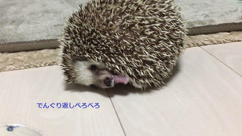 f:id:chikojirou:20160614213822j:plain