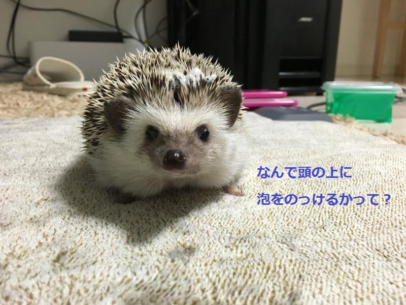 f:id:chikojirou:20160616201553j:plain