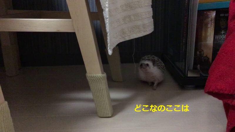 f:id:chikojirou:20160622213303j:plain