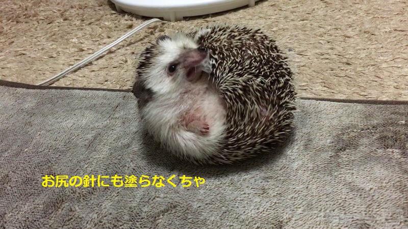 f:id:chikojirou:20160626212546j:plain
