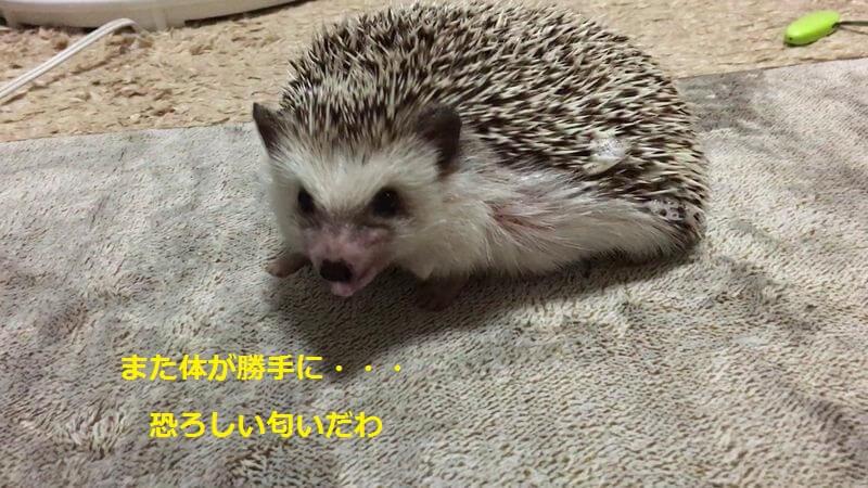 f:id:chikojirou:20160626212559j:plain
