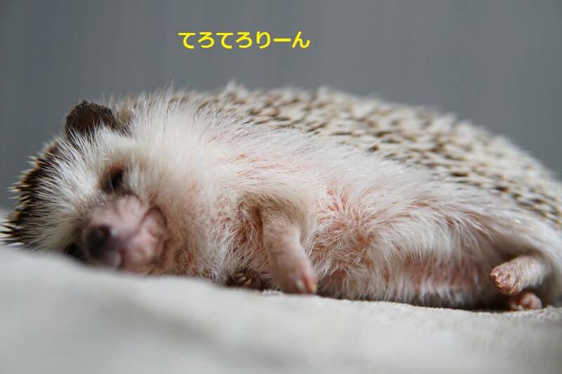 f:id:chikojirou:20160701203316j:plain
