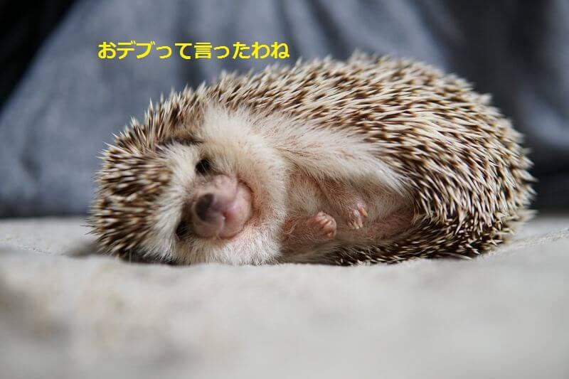 f:id:chikojirou:20160701203333j:plain