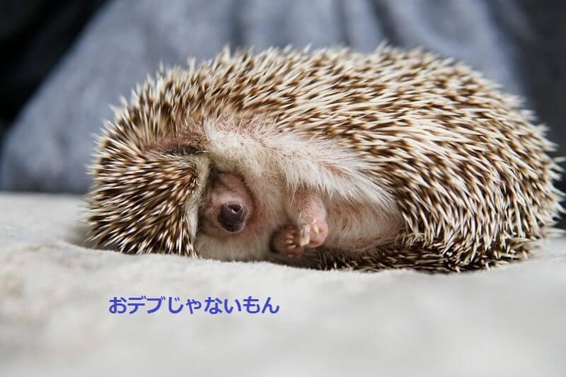 f:id:chikojirou:20160701203341j:plain