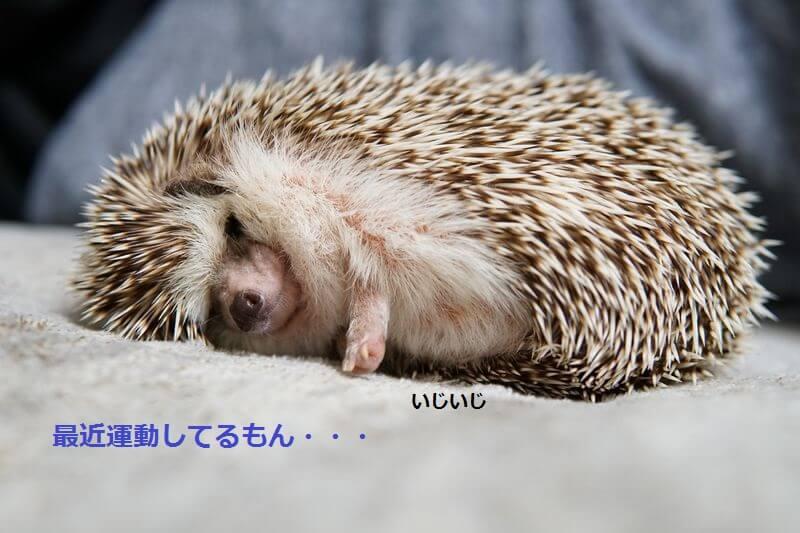 f:id:chikojirou:20160701203348j:plain