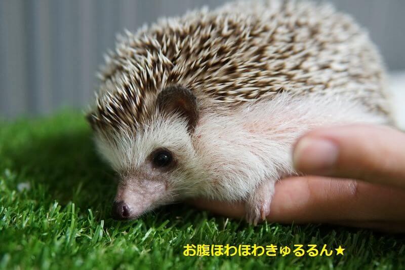 f:id:chikojirou:20160705203740j:plain