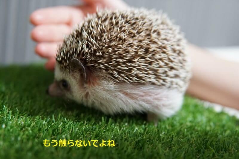 f:id:chikojirou:20160705203753j:plain