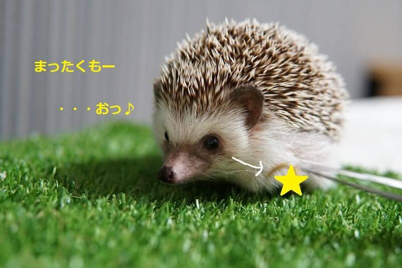 f:id:chikojirou:20160705203802j:plain