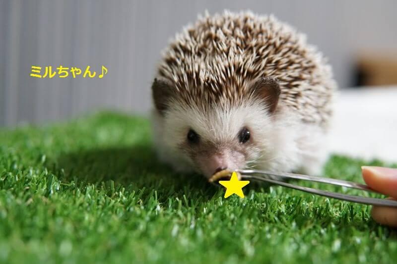 f:id:chikojirou:20160705203809j:plain