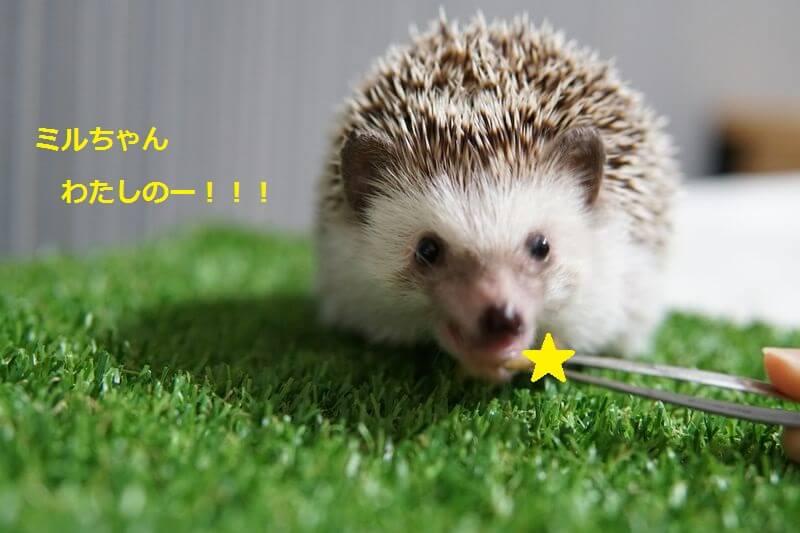 f:id:chikojirou:20160705203817j:plain