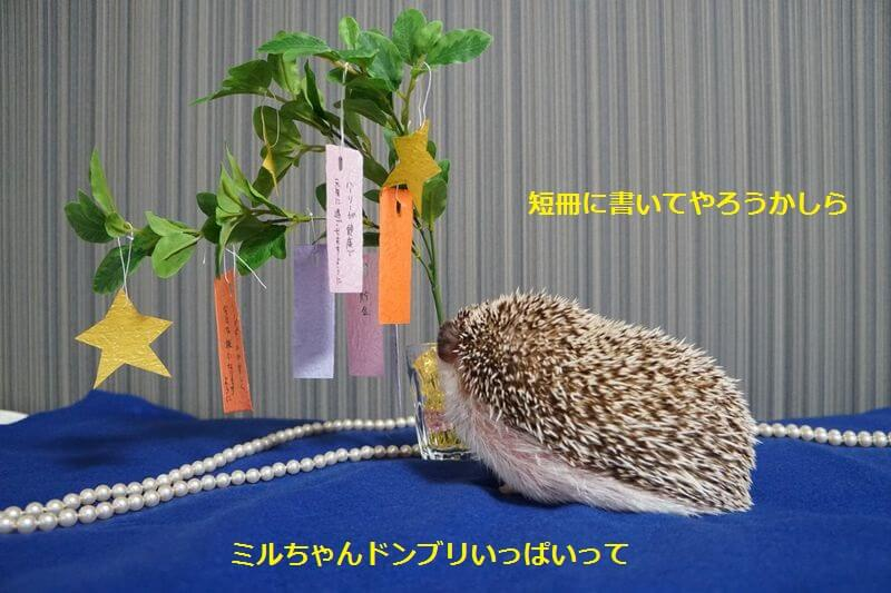 f:id:chikojirou:20160705204525j:plain