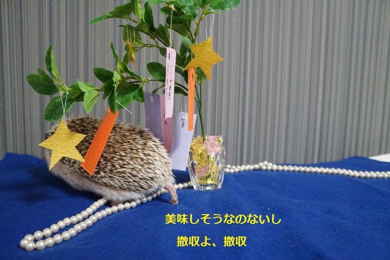 f:id:chikojirou:20160705204541j:plain