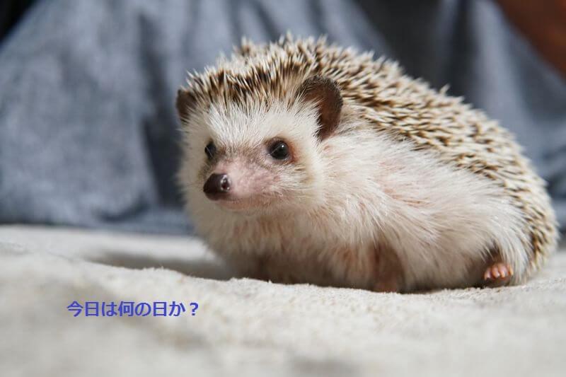 f:id:chikojirou:20160706213749j:plain