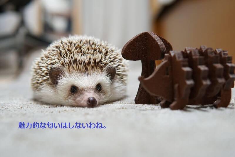 f:id:chikojirou:20160713210040j:plain