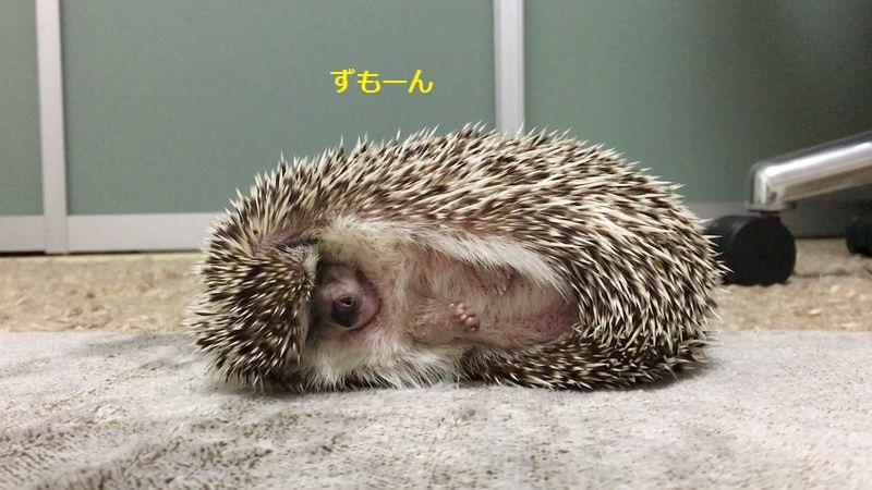 f:id:chikojirou:20160716211754j:plain