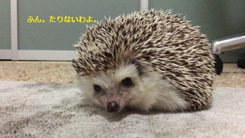 f:id:chikojirou:20160716211844j:plain