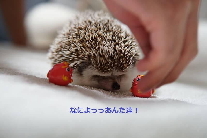 f:id:chikojirou:20160721210351j:plain