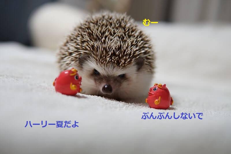 f:id:chikojirou:20160721210400j:plain