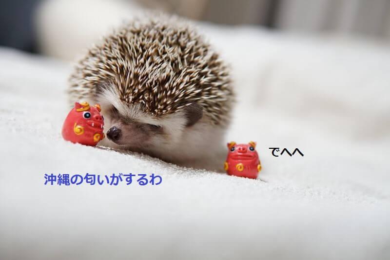 f:id:chikojirou:20160721210408j:plain