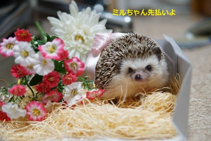 f:id:chikojirou:20160725212340j:plain