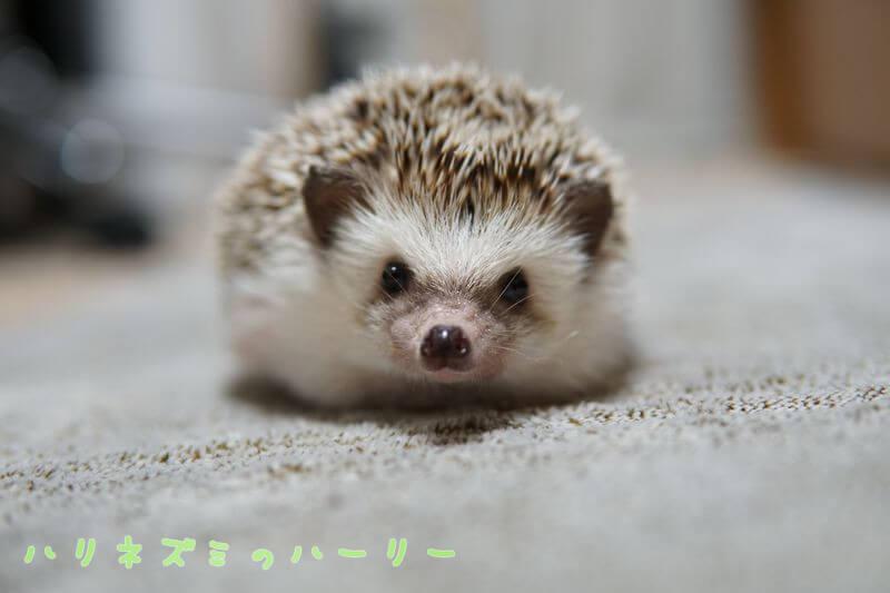 f:id:chikojirou:20160728212103j:plain
