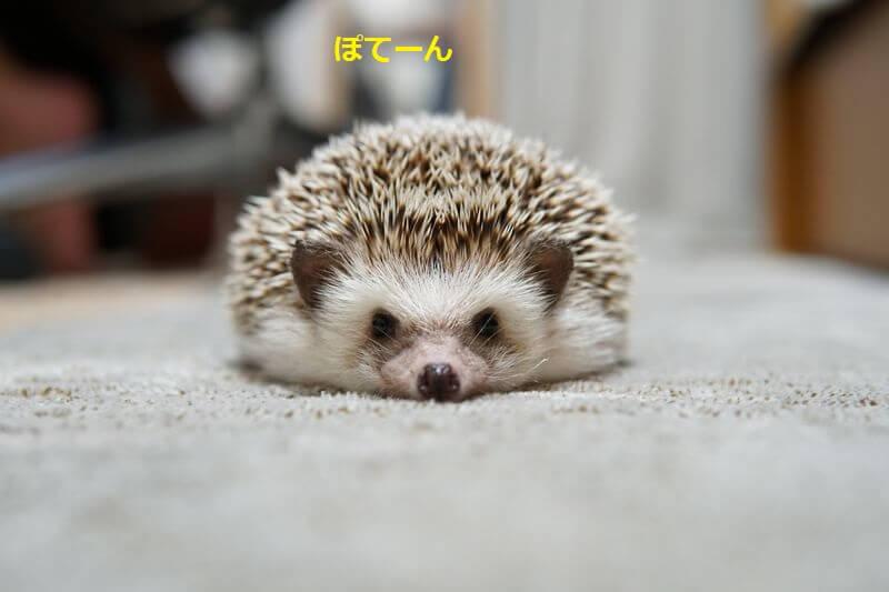 f:id:chikojirou:20160728212117j:plain